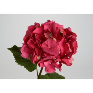 Roža HORTENZIJA rdeča 118795