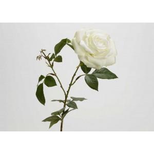 Roža/vrtnica NEVADA bela 126256